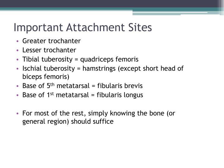 Important Attachment Sites