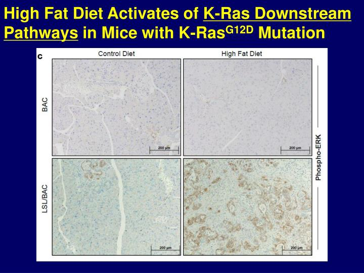 High Fat Diet Activates of