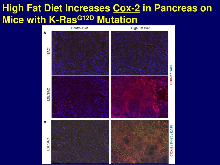 High Fat Diet Increases