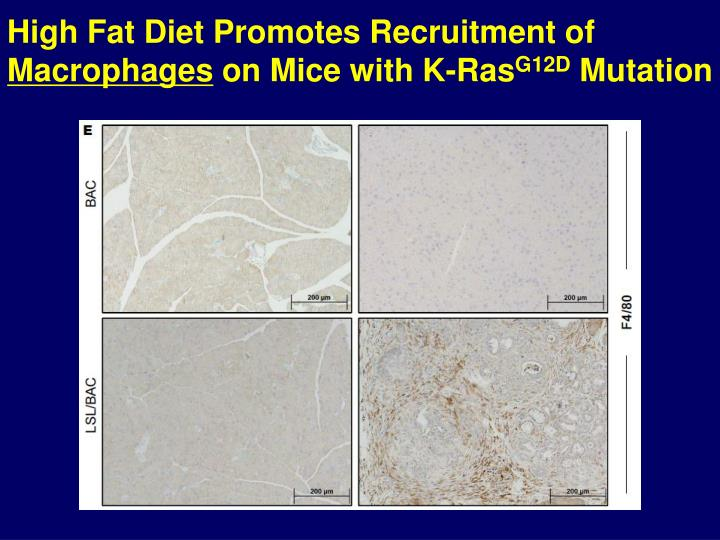 High Fat Diet Promotes Recruitment of