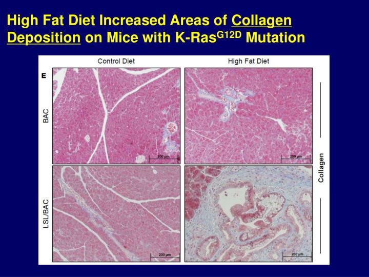 High Fat Diet Increased Areas of