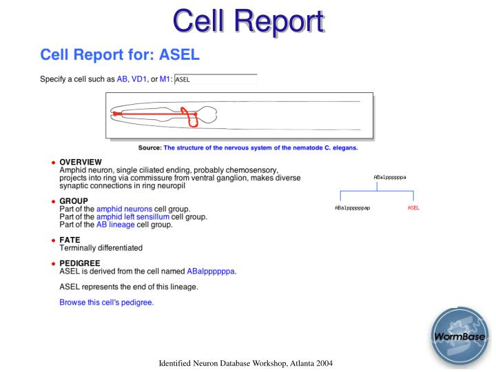 Cell Report