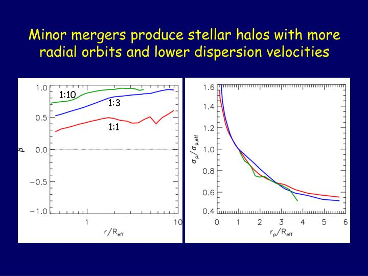 Minor mergers produce stellar halos with more radial orbits and lower dispersion velocities