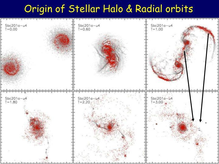 Origin of Stellar Halo & Radial orbits