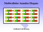 multicellular annulus elegans