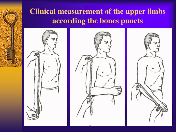 Clinical measurement of the upper limbs according the bones puncts