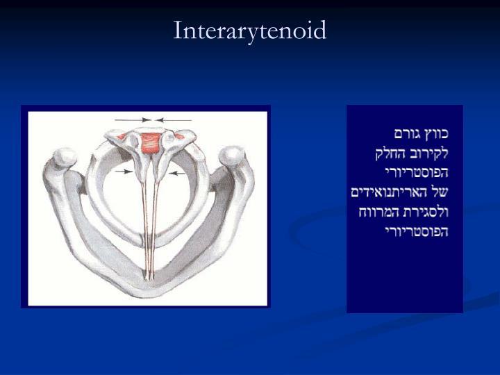 Interarytenoid