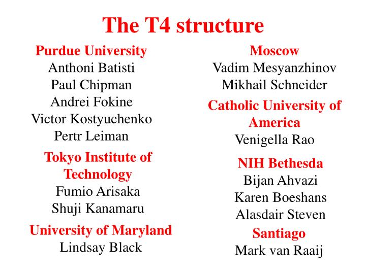 The T4 structure