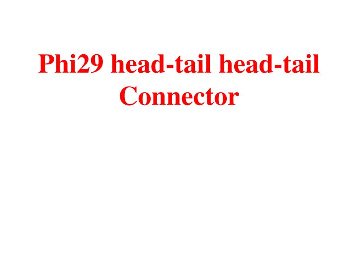 Phi29 head-tail head-tail Connector