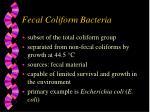 fecal coliform bacteria