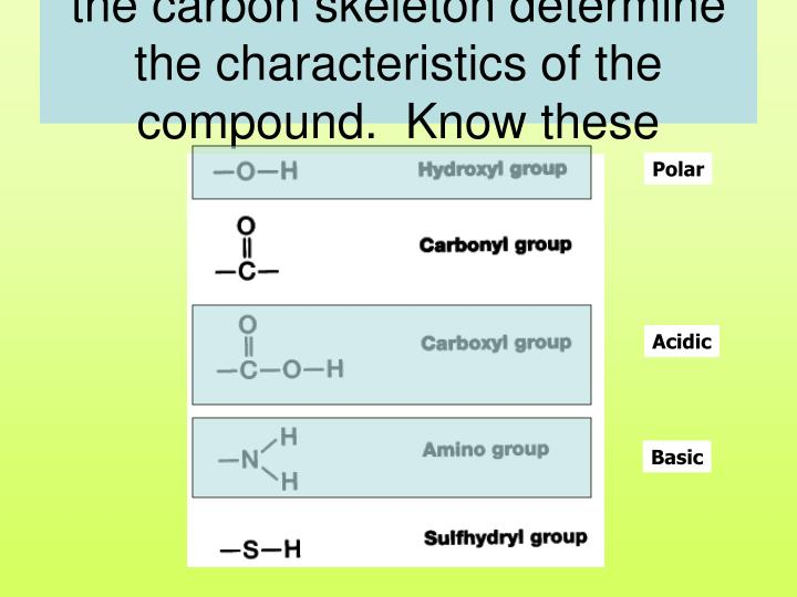 Functional groups attached to the carbon skeleton determine the characteristics of the compound.  Know these examples!