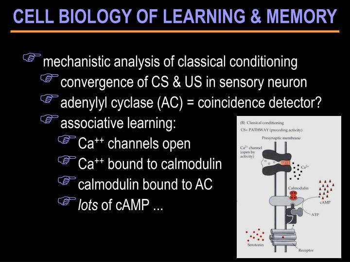 CELL BIOLOGY OF LEARNING & MEMORY