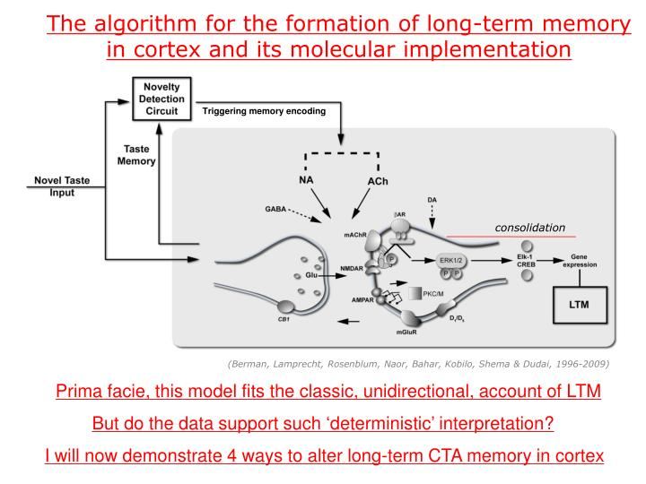 The algorithm for the formation of long-term memory