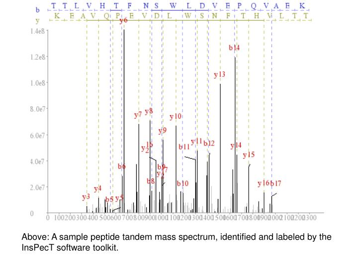 Above: A sample peptide tandem mass spectrum, identified and labeled by the InsPecT software toolkit.
