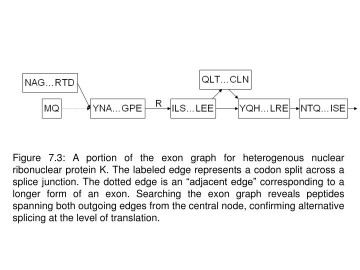 "Figure 7.3: A portion of the exon graph for heterogenous nuclear ribonuclear protein K. The labeled edge represents a codon split across a splice junction. The dotted edge is an ""adjacent edge"" corresponding to a longer form of an exon. Searching the exon graph reveals peptides spanning both outgoing edges from the central node, confirming alternative splicing at the level of translation."