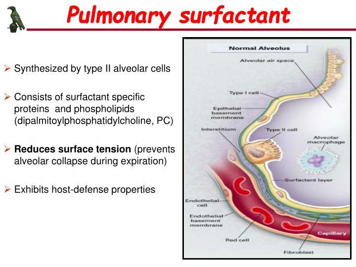 Pulmonary surfactant