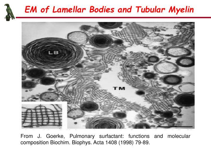 EM of Lamellar Bodies and Tubular Myelin
