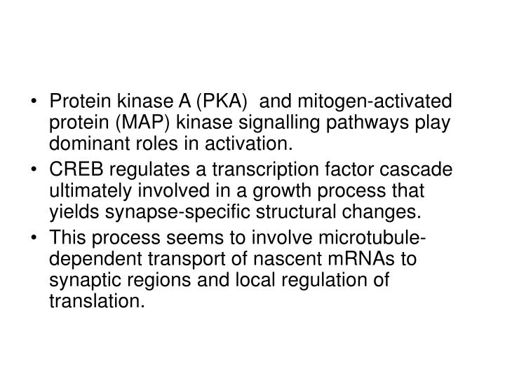 Protein kinase A (PKA)  and mitogen-activated protein (MAP) kinase signalling pathways play dominant roles in activation.