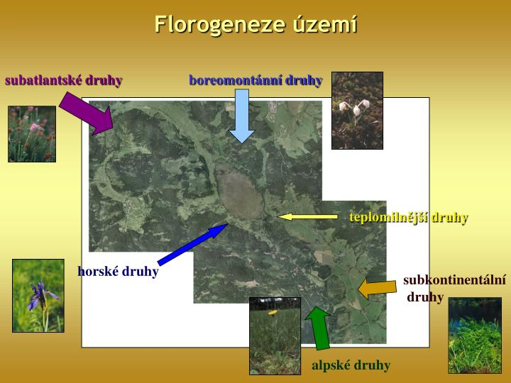Florogeneze území