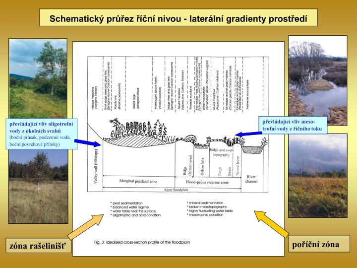 Schematický průřez říční nivou - laterální gradienty prostředí