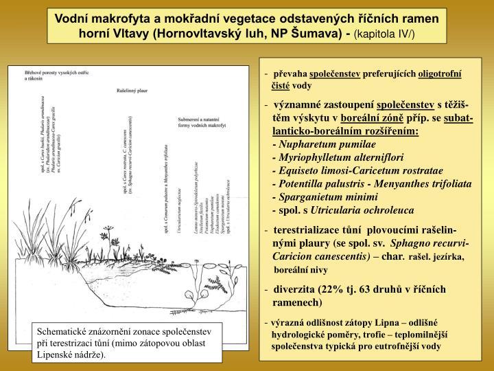 Vodní makrofyta a mokřadní vegetace odstavených říčních ramen horní Vltavy (Hornovltavský luh, NP Šumava) -