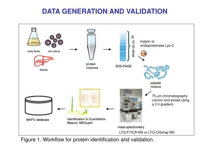 DATA GENERATION AND VALIDATION