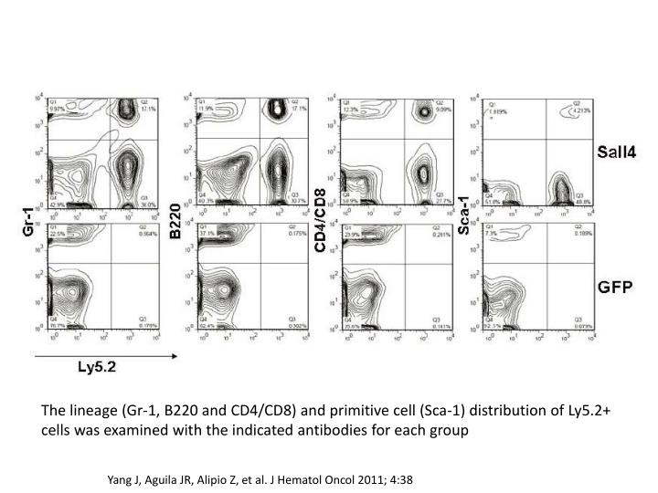 The lineage (Gr-1, B220 and CD4/CD8) and primitive cell (Sca-1) distribution of Ly5.2+ cells was examined with the indicated antibodies for each group