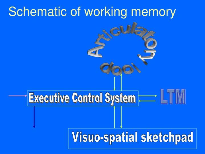 Schematic of working memory