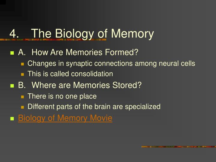 4.The Biology of Memory
