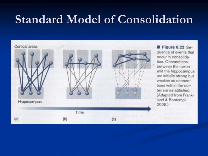 Standard Model of Consolidation