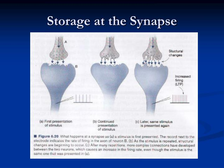 Storage at the Synapse