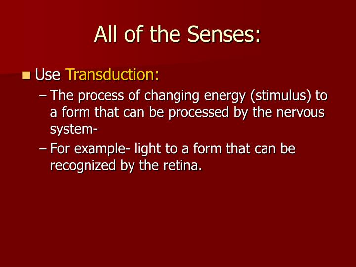 All of the Senses: