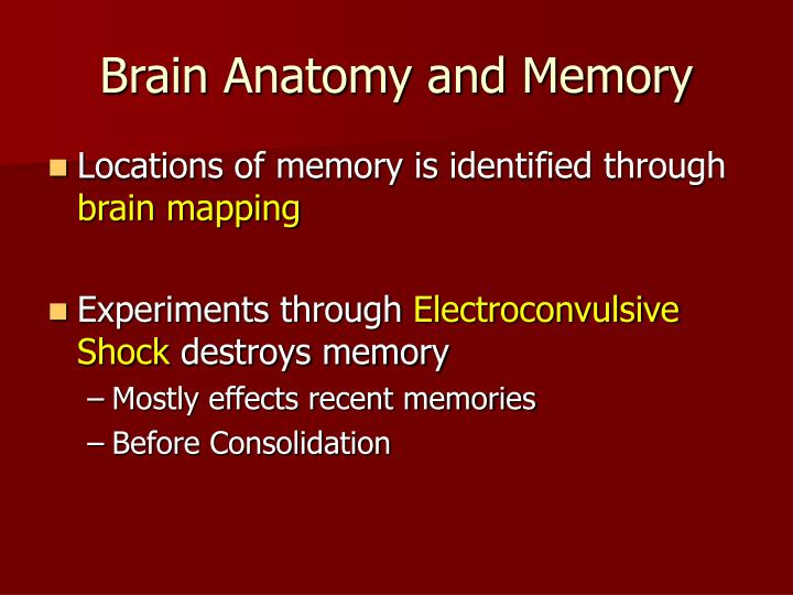 Brain Anatomy and Memory