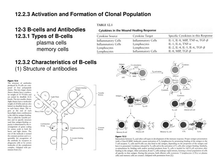 12.2.3 Activation and Formation of Clonal Population