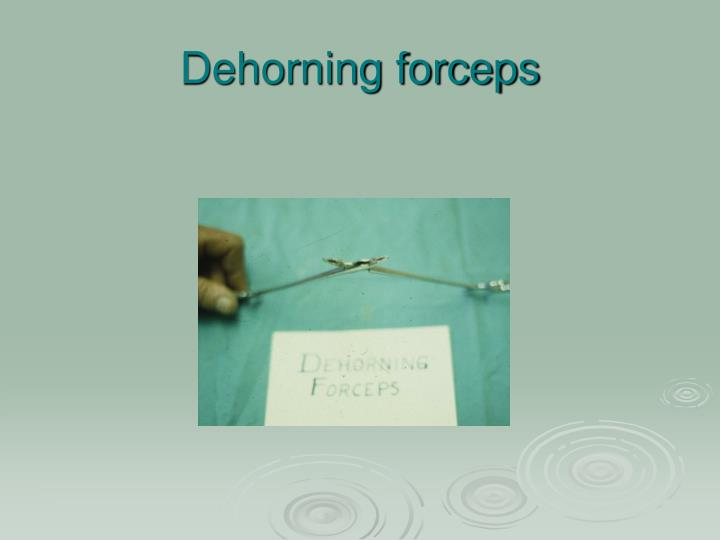Dehorning forceps