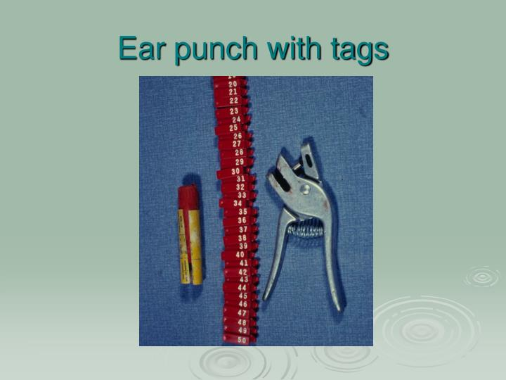 Ear punch with tags