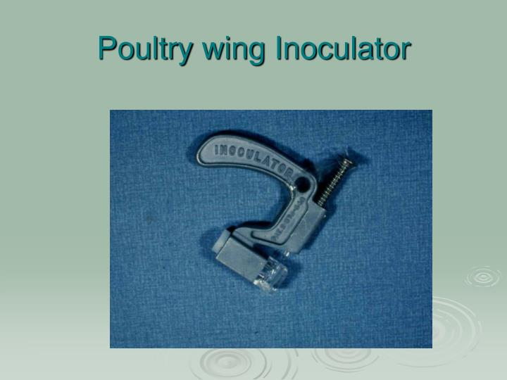 Poultry wing Inoculator