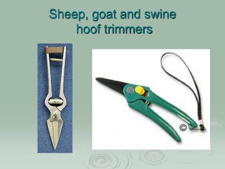 Sheep, goat and swine