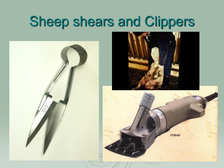 Sheep shears and Clippers