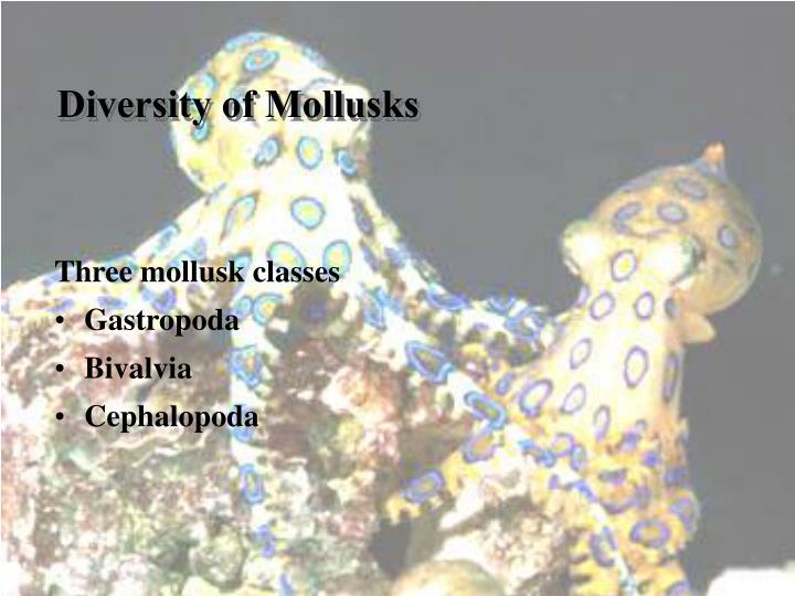 Diversity of Mollusks