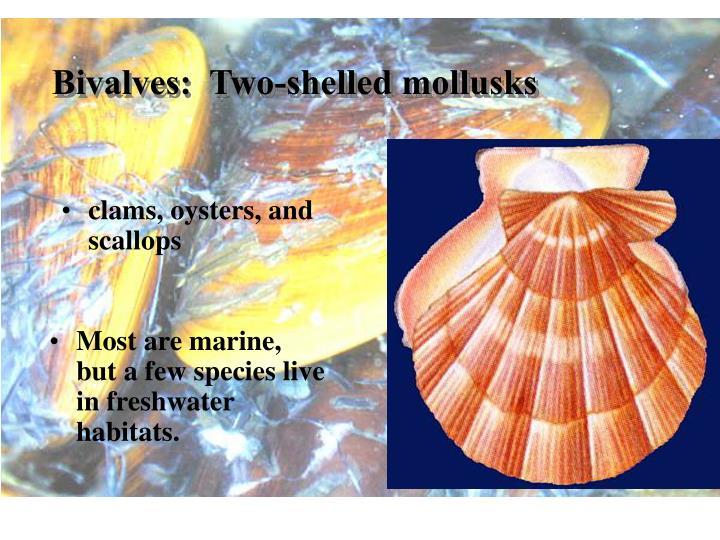 Bivalves:  Two-shelled mollusks