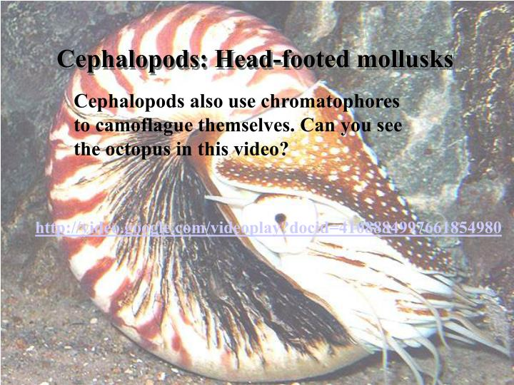 Cephalopods: Head-footed mollusks