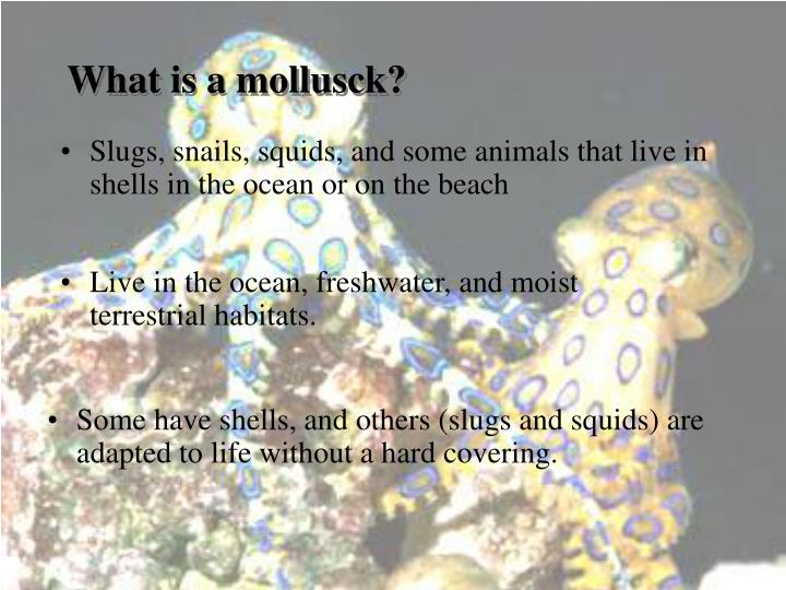 What is a mollusck?