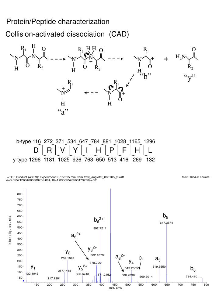 Protein/Peptide characterization