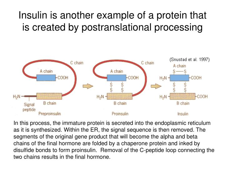 Insulin is another example of a protein that is created by postranslational processing