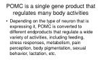 pomc is a single gene product that regulates many body activities