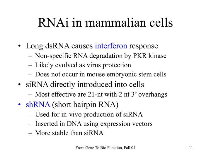 RNAi in mammalian cells