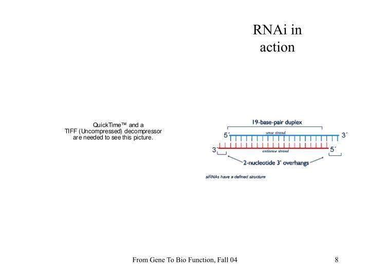RNAi in