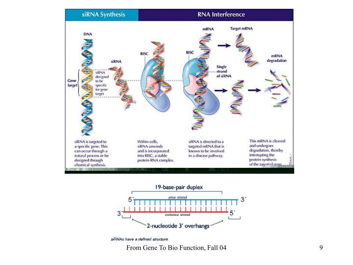 From Gene To Bio Function, Fall 04