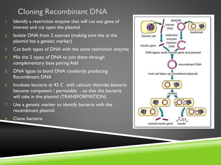 Cloning Recombinant DNA